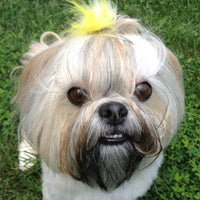 Photo taken at Meili's Bark Park by Ashley C. on 8/11/2012