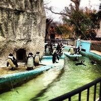 Photo taken at Ueno Zoo by Junichiro F. on 3/4/2012