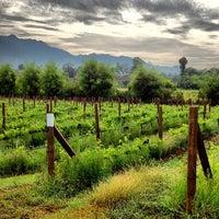 Photo taken at PB Valley Khao Yai Winery by Prayut P. on 5/17/2012