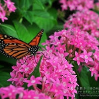 Photo taken at Krohn Conservatory by Chris T. on 4/24/2012