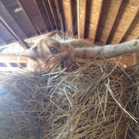 Photo taken at The Shepard Farm by Natalie on 8/17/2012