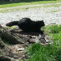 Photo taken at Black Cat Spotting by Chloe E. on 4/16/2012