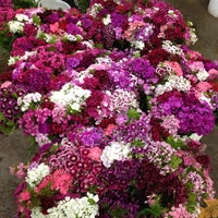 Photo taken at SF Flower Mart by Andre J. on 5/18/2012
