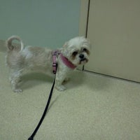Photo taken at Abbott Valley Veterinary Center by Tina B. on 3/22/2012