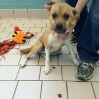 Photo taken at Animal Shelter by J S. on 4/10/2012