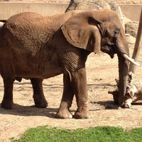 Photo taken at African Elephants by Karina E. on 2/21/2012
