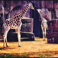 Photo taken at Milwaukee County Zoo by Carlos F. on 4/14/2012