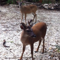 Photo taken at Big Pine Key by Manny P. on 6/20/2012