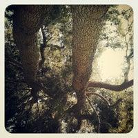 Photo taken at UCR Psychology Building by Karen E. on 4/19/2012