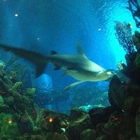 Photo taken at Coral Reef Restaurant by Karen B. on 5/26/2012