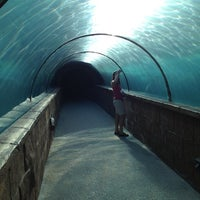Photo taken at Predators Tunnel by Justin M. on 2/19/2012