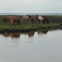 Photo taken at Assateague Island National Seashore (Maryland) by Julia on 8/6/2012