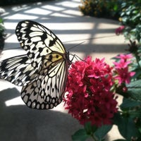 Photo taken at Cecil B. Day Butterfly Center by Whitney W. on 9/7/2012