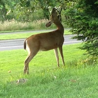Photo taken at Pumpkin Ridge Golf Club by Kelsey D. on 6/21/2012