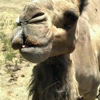 Photo taken at Sharkarosa Wildlife Ranch by Roberto N. on 7/29/2012