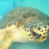 Photo taken at South Carolina Aquarium by Nichole on 7/11/2012