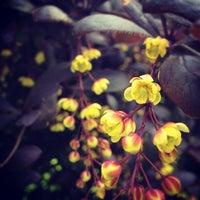 Снимок сделан в Дендрологический парк пользователем Byblos G. 5/19/2012