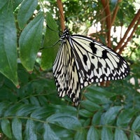 Photo taken at Cecil B. Day Butterfly Center by Alicia H. on 7/23/2012