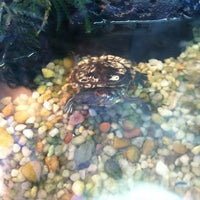 Photo taken at Aqua-World Pet Super Center by Ted D. on 6/26/2012
