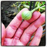 Photo taken at Vedgewater Community Garden-Peterson Garden Project by Amy L. on 7/11/2012