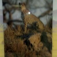 Photo taken at Safari Cafe by Ed C. on 2/17/2012
