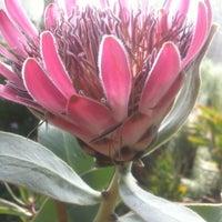 Das Foto wurde bei Botanisches Museum von Matti H. am 3/17/2012 aufgenommen