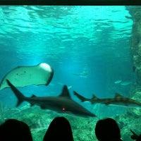 Photo taken at COEX Aquarium by h. kyung B. on 5/1/2012