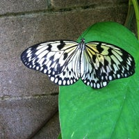 Photo taken at Butterfly Pavilion by Amber M. on 3/16/2012