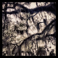 Photo taken at New Orleans City Park by Paul B. on 2/14/2012