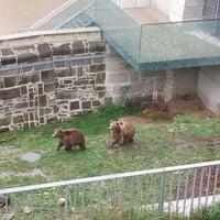 Das Foto wurde bei Bärenpark von Amuni G. am 9/12/2012 aufgenommen