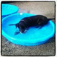 Photo taken at Churchill Field Dog Park by Natalie G. on 8/31/2012