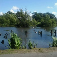 Photo taken at the duck pond by Abigail N. on 6/24/2012