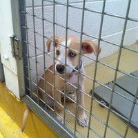 Photo taken at Humane Society of El Paso by Priscilla V. on 7/27/2012