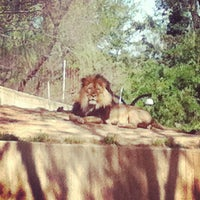 Photo taken at Great Cats at The National Zoo by Mitch B. on 3/26/2012