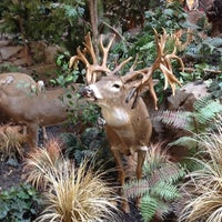 Photo taken at Cabela's by Jonathan Harris B. on 3/31/2012