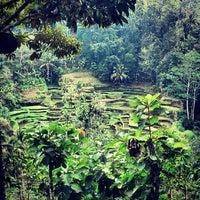 Снимок сделан в Tegallalang Rice Terraces пользователем Alvin B. 9/9/2012