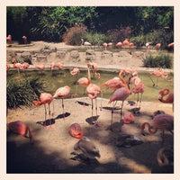 Photo taken at Flamingo Exhibit by Zach C. on 8/20/2012