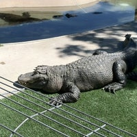 Photo taken at Reptile Gardens by Kevin L. on 9/1/2012