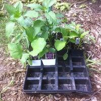 Photo taken at Pflugerville Community Garden by Dara Q. on 3/24/2012