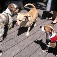 Photo taken at Tompkins Square Park Dog Run by Siobhan Q. on 6/3/2012