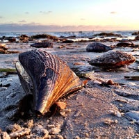 Photo taken at Madeira Beach by Diana L. on 6/28/2012