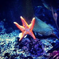 Photo taken at Ripley's Aquarium by Aaron T. on 7/17/2012