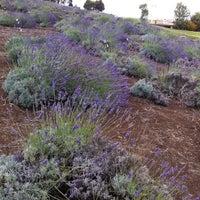 Photo taken at Lavender Farm by Janet L. on 7/9/2012