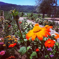 Photo taken at Family Wineries Dry Creek by Shana R. on 8/2/2012