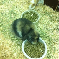 Photo taken at Pets Plus by Andy H. on 7/13/2012