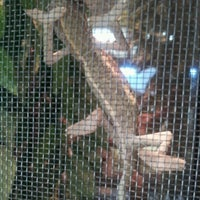 Photo taken at Reptile Island by Jacqueline L. on 3/22/2012