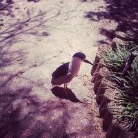 Photo taken at Seaside Seabird Sanctuary by Bill R. on 4/24/2012