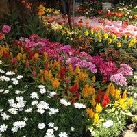Foto tomada en Mercado de Plantas y Flores  Madreselva por Eli Z. el 6/10/2012