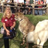 4/6/2012 tarihinde Terry A.ziyaretçi tarafından Cheetah Run'de çekilen fotoğraf