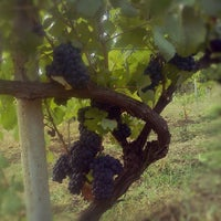 Photo taken at calosso azienda agricola by Stefano C. on 8/25/2012